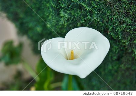 화단 한켠에 핀 고급스러운 느낌의 꽃 한송이 68719645