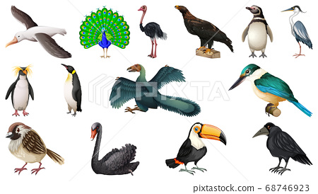Set of different birds cartoon style isolated on 68746923