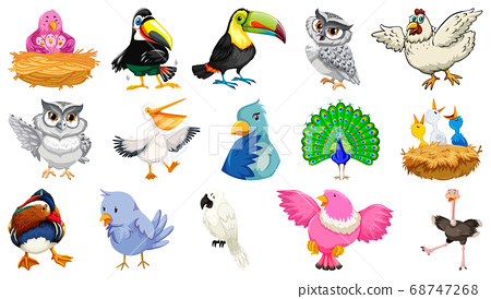 Set of different birds cartoon style isolated on 68747268