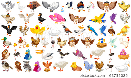 Set of different birds cartoon style isolated on 68755026