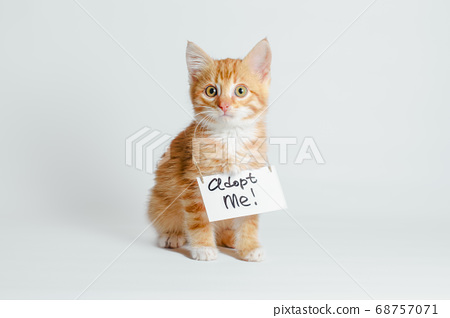 cute ginger kitten with a sign adopt me on his neck on a light background 68757071