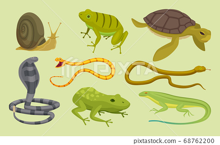 Reptiles set. Lizard snake turtles snail cartoon vector wild animals 68762200