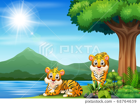 Scene with two tigers by the river 68764639