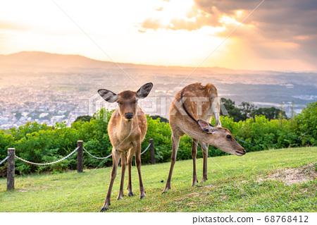 《奈良縣》若草山鹿/黃昏 68768412
