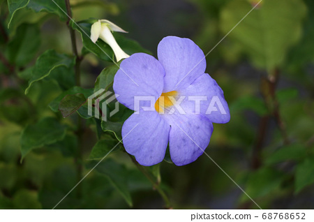 Purple blossom flower on the tree with nature 68768652