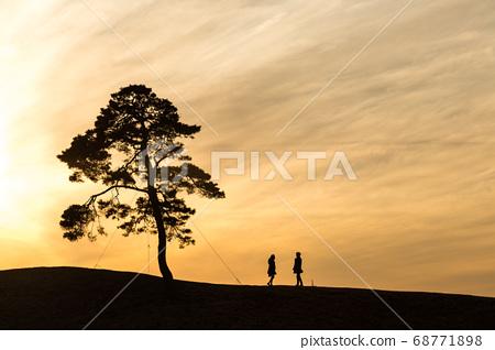 暮光之城和松树 68771898