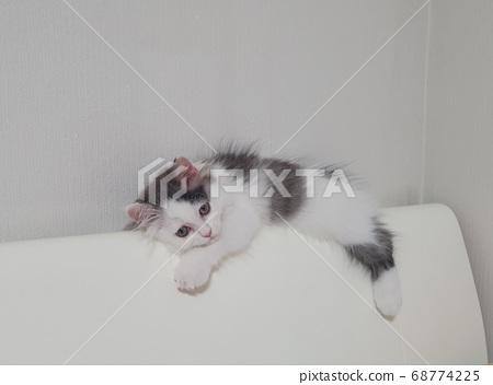 졸린 고양이 68774225