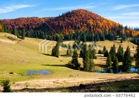 mountain landscape in autumn. forest in fall 68776462