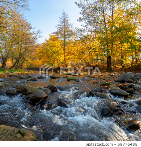 mountain river among the forest in autumn. sunny 68776488