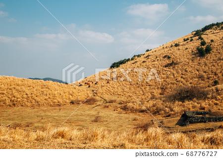 Yongnunioreum volcanic cone, dry grass hill in Jeju Island, Korea 68776727