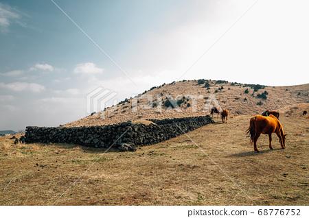 Horses on dry grass field at Yongnunioreum volcanic cone in Jeju Island, Korea 68776752