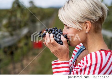 Portrait of woman smelling grapes in vineyard in autumn, harvest concept. 68777372