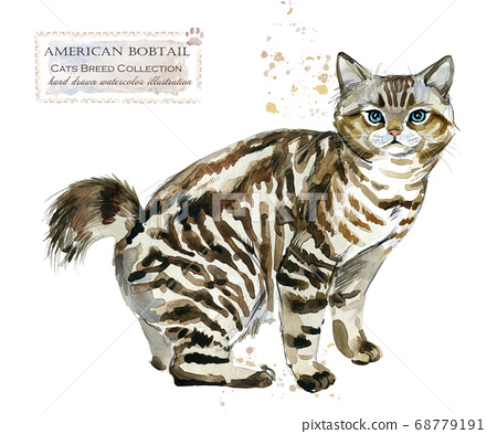 American Bobtail cat. home pet. breed of Cats series. cute kitten. watercolor domestic animal illustration.  68779191