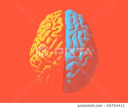 Hemispheres brain separate color illustration on 68784412