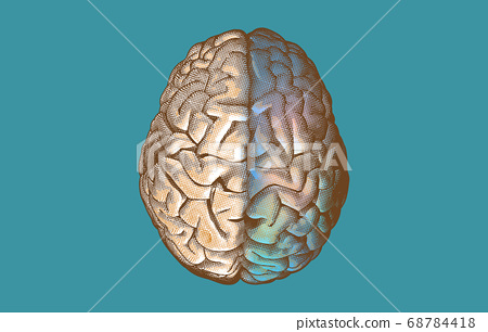 Brain hemispheres on top view illustration on 68784418