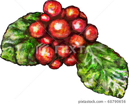 붉은 열매의 일러스트 68790656