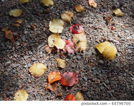 落葉被陽光照亮 68796700