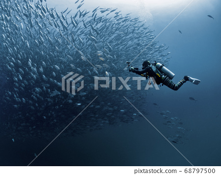 Diver and Jack Fish 68797500