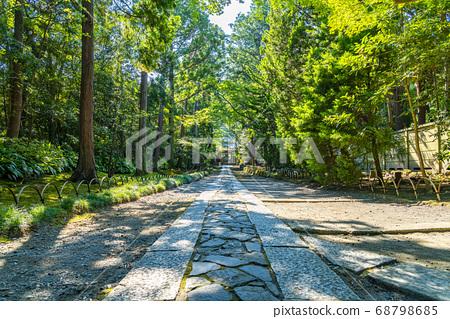 [가나가와 현] 가마쿠라 녹색이 우거진 寿福寺의 참배 길 68798685