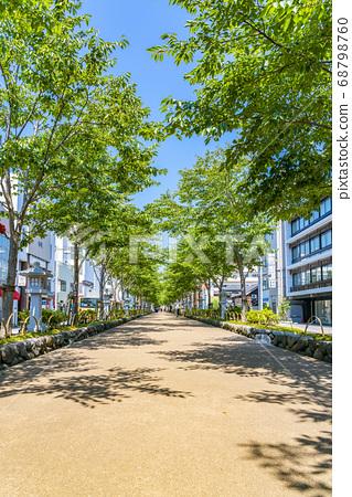 [가나가와 현] 가마쿠라 여름 녹색이 예쁜 쓰루 오카 하치만 段葛 68798760