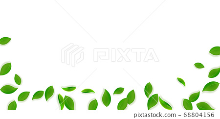 Falling green leaves. Fresh tea neat leaves flying 68804156