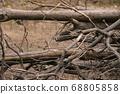 枯倒的樹幹 68805858