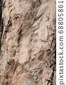 樹的紋理 68805861