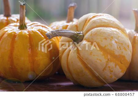 新鮮,南瓜,新鮮なカボチャ、Fresh, pumpkin, 68808457