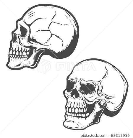 Set of the vector skulls isolated on white 68815959