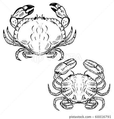 Hand drawn crabs isolated on white background. 68816791