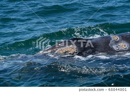 灰鯨鼻孔 68844801