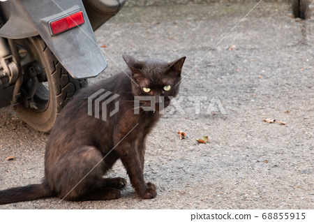 stray black cat sit on ground 68855915