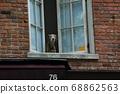 漫步紐約。當我抬頭時,狗在看。 68862563