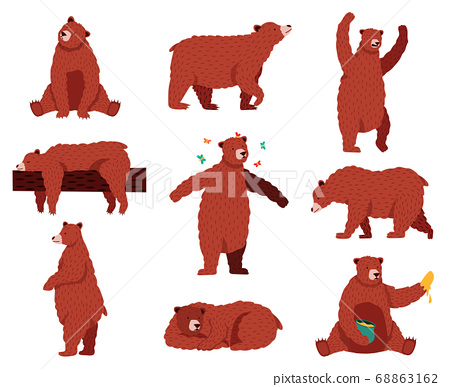 Brown grizzly bear. Cartoon wild cute bears, forest fur animal, sitting, playing and sleeping wildlife mammal, funny bear vector illustration set 68863162