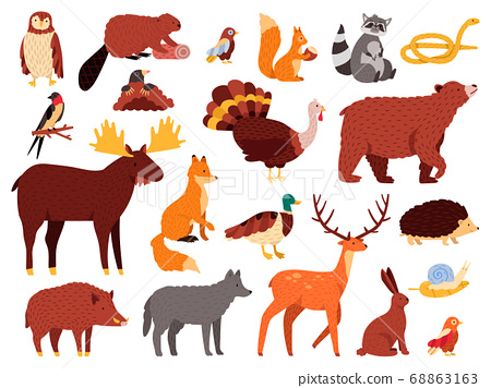 Cute animals. Cartoon forest animals, bear raccoon fox and cute owl, hand drawn mammals and birds, fall wood fauna vector illustration icons set 68863163
