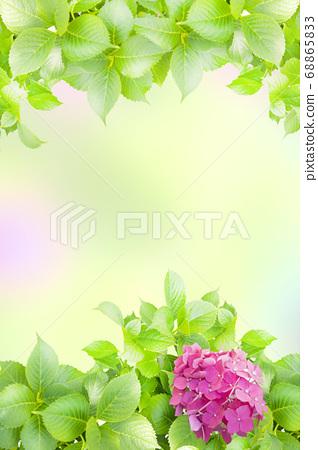 新鮮的繡球花背景圖像 68865833