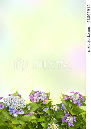 绣球花背景图像 68865919