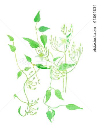 Clematis terniflora 센닌소우 68866834