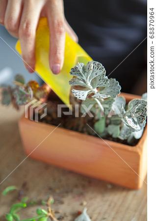 種植觀葉植物 , 多肉植物, 植物観葉植物、多肉植物、Plant foliage plants, 68870964