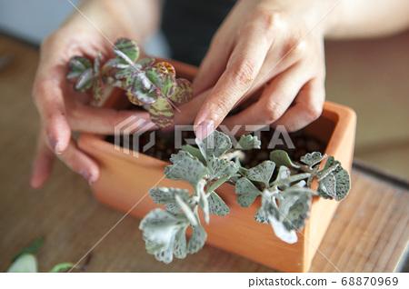 种植观叶植物 , 多肉植物, 植物観叶植物、多肉植物、Plant foliage plants, 68870969