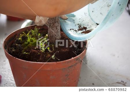種植觀葉植物 , 多肉植物, 植物観葉植物、多肉植物、Plant foliage plants, 68870982