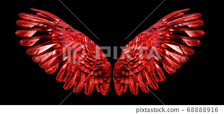 Angel wings an isolated on background 68888916