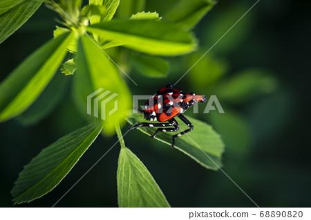 生活在韓國的昆蟲 68890820