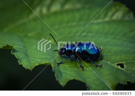 生活在韩国的昆虫 68890835