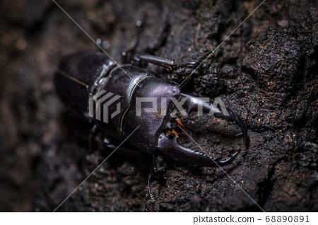 生活在韓國的昆蟲 68890891