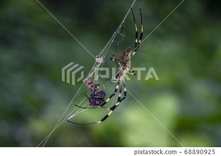 生活在韓國的昆蟲 68890925