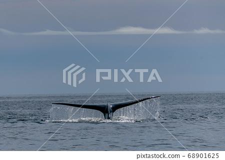 藍鯨尾巴 68901625