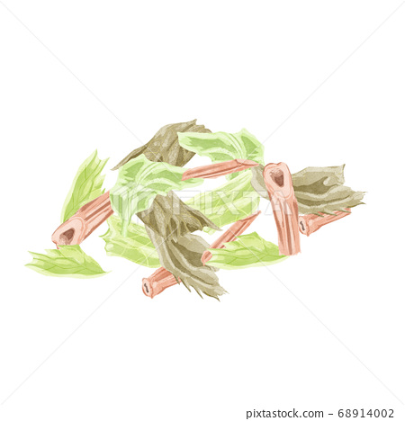 Mint Chinese herbal medicine watercolor illustration 68914002