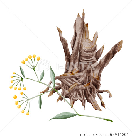 Watercolor illustration of Chinese herbal medicine 68914004