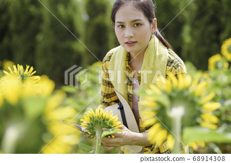 Agriculture, tablet, woman 68914308